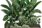 3DSMAX室内盆栽观赏植物精细3D模型集