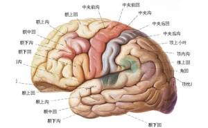 """""""超强记忆""""训练:用这5招,提升3倍记忆力,成就最强大脑!"""