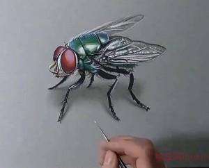 """看手绘大神如何画一只逼真到""""飞""""起来的绿头苍蝇"""