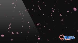 AE模板-樱花飞舞带通道视频素材