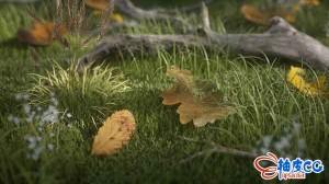 62个OC叶子材质预设 + 248个4K纹理 Gumroad - Leaves Shaders Pack #1 for C4D