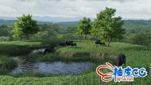 DAZ studio室外草地牛群环境3D模型模块合集