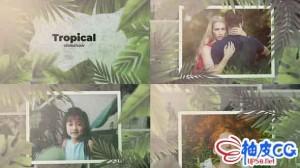 AE模板 热带雨林树叶相片幻灯展示 Tropical Slideshow