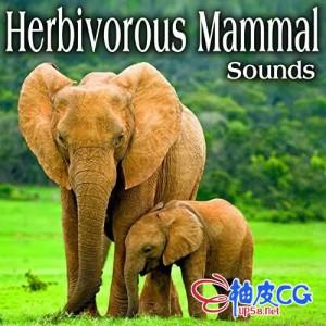 好莱坞猪驴牛羊象马骆驼豚鼠食草哺乳动物音效素材库