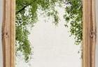 120张5K高清春夏针叶角树PNG免扣透明背景后期合成平面素材