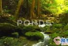 自然森林小河流水4K高清视频素材