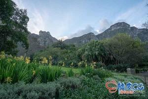 154张南非原始山脉史前植物花园平面设计图片素材
