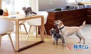 狗猫宠物小动物鸟类马蛇蜥蜴PSD透明免扣背景设计素材合辑