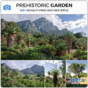 154张南非植物公园异国风景图片设计素材