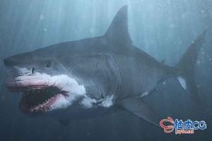 3DSMAX海洋鲨鱼3D模型