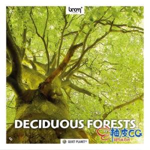 自然落叶森林环境鸟类鸣叫昆虫嗡嗡声 WAV高品质无损音效素材 + 中文名称参照