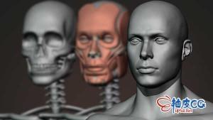 Blender全程雕刻解剖男性人物角色视频教程