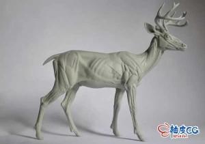 ZBrush数字雕刻动物精细3D模型视频教程