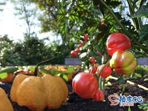 3DSMAX / Corona胡萝卜椰菜辣椒番茄蔬菜悬铃树阔叶树灌木3D模型