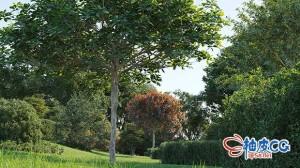 3DSMAX / VRay / Corona装饰树木灌木草丛植物3D模型