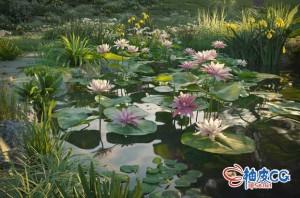 3DSMAX / VRay / Corona莲藕水仙睡莲扁竹兰高品质植物3D模型