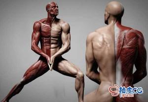 Zbrush & Photoshop制作人体结构解剖3D模型视频教程