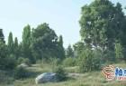 C4D自然元素树木草岩石创建插件 Forester v1.5